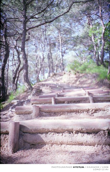 숲 속 계단
