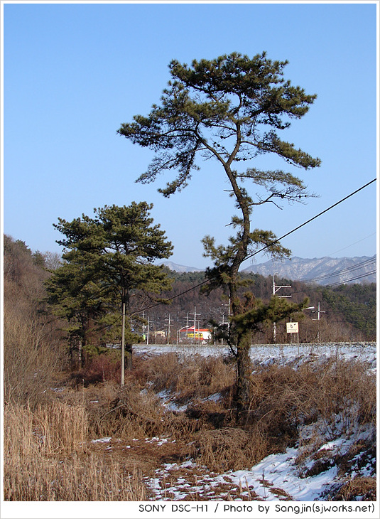 시원하게 뻗은 나무1