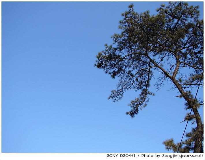 시원하게 뻗은 나무2