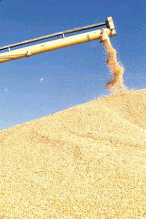 곡물가격 인상