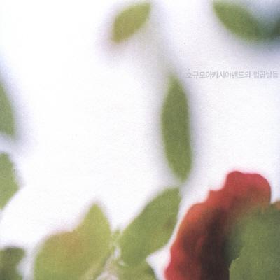 소규모 아카시아 밴드 [일곱날들 (2008)]